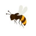 Bee removal Perth